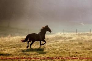 Running_horse_(5210454901)
